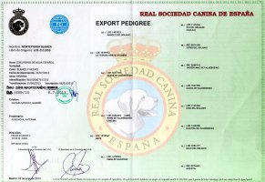 Blanca export pedigree